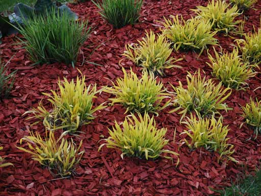 Mulch & Top Soil